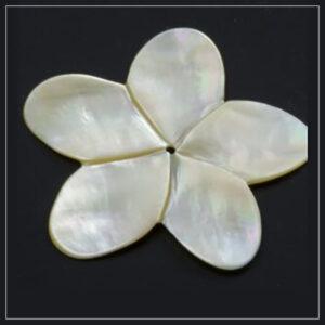 Perlemor blomst yellowlip